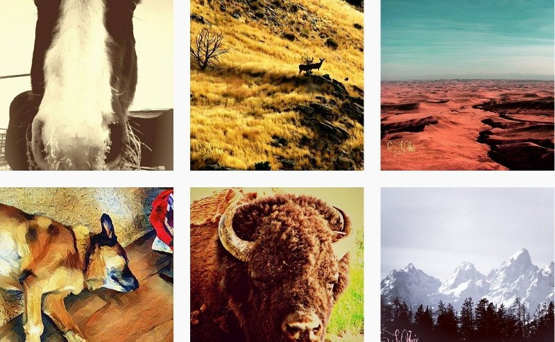 How to find your locals on Instagram